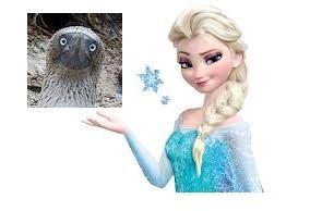 SHIVERS & Elsa