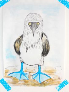 Blue Footed Booby - Nicole's Art